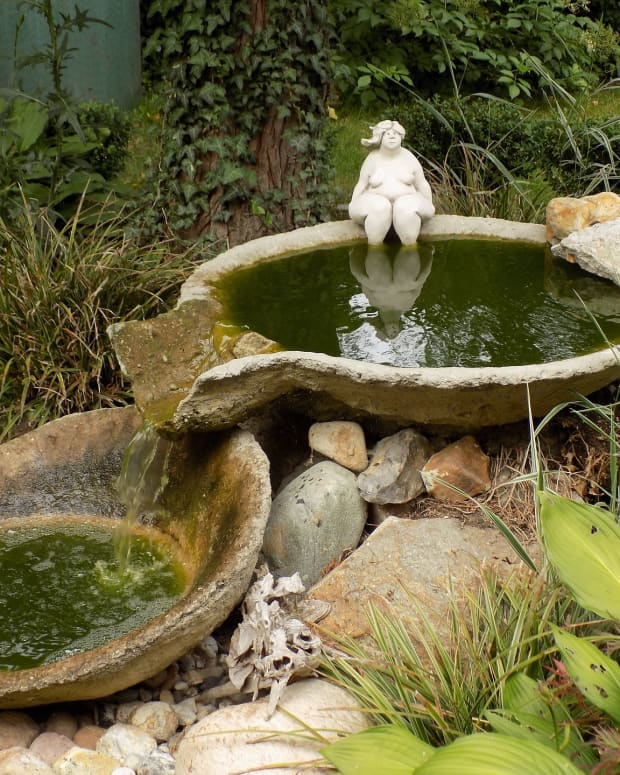 how-to-clean-birdbaths