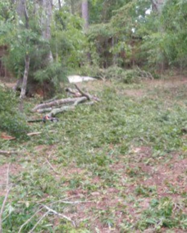 how-not-to-clean-up-woody-hurricane-debris