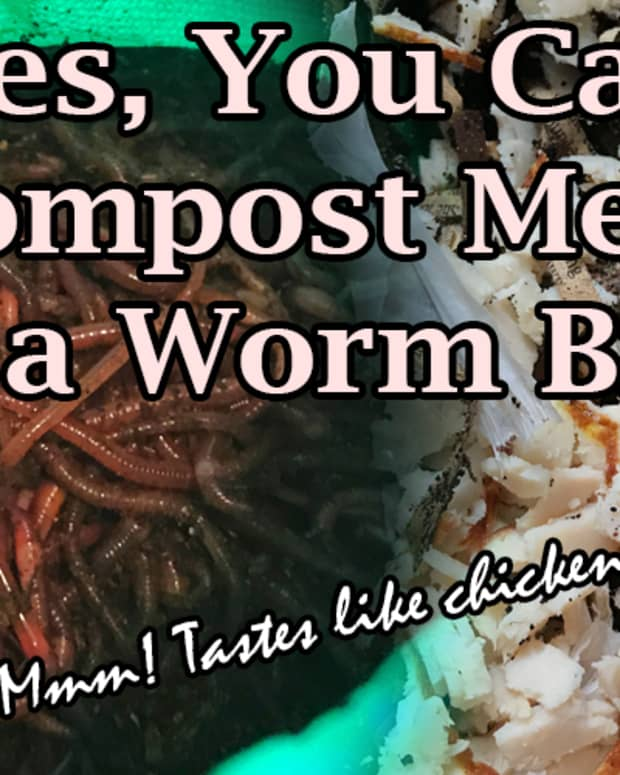 yes-you-can-compost-meat-in-a-worm-bin