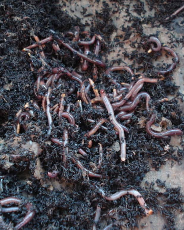 what-is-vermicomposting