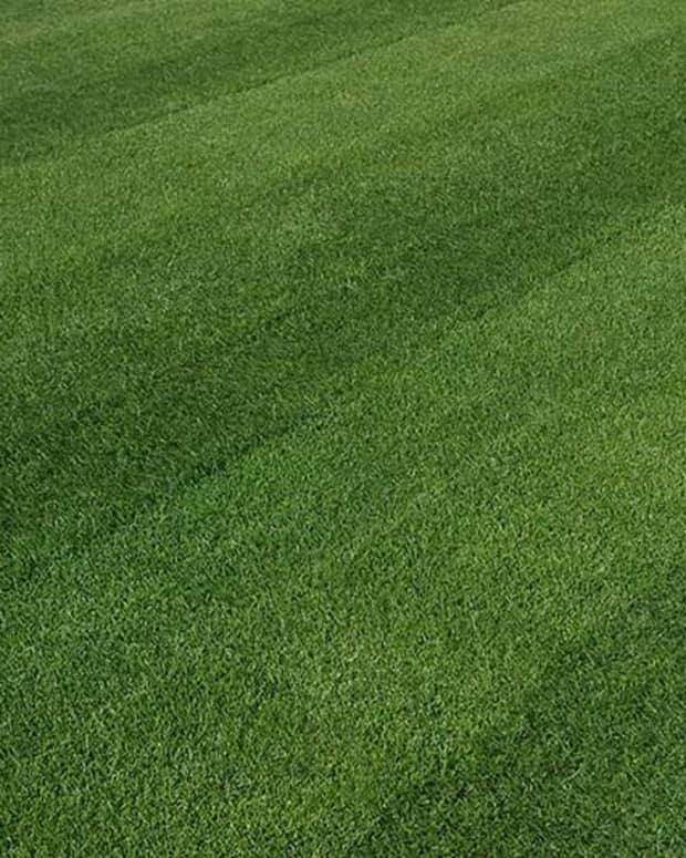 caring-for-ohio-lawn-grass