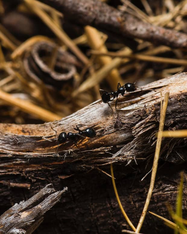 3-ingenious-ways-to-get-rid-of-ants