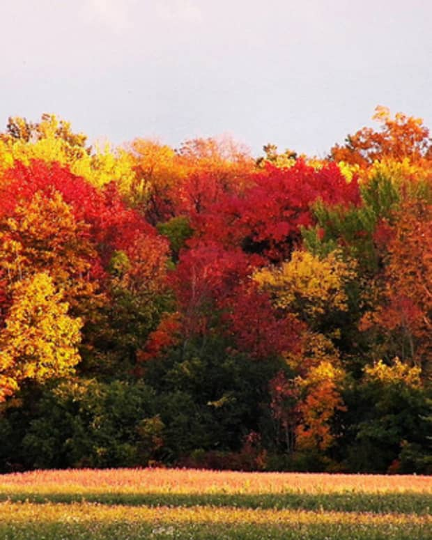 decorating-your-home-with-fall-colors