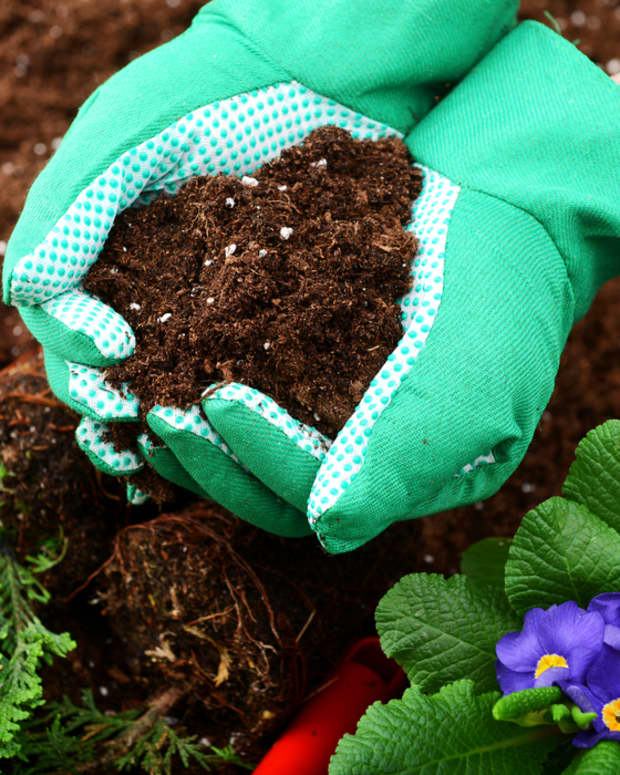 how-to-prepare-your-soil-for-healthy-annuals-and-perennials