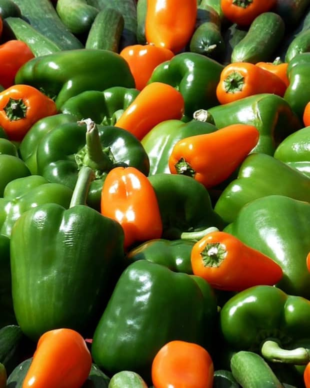 how-to-grow-any-kind-of-pepper
