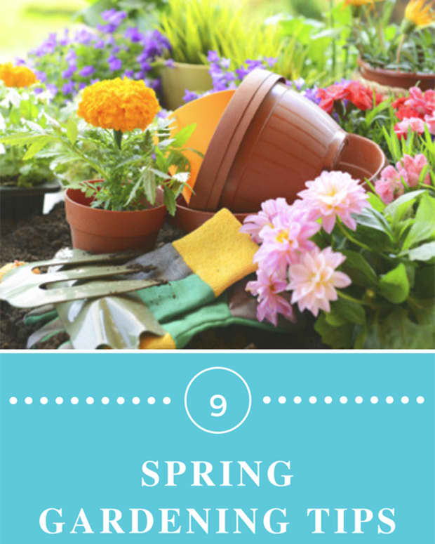 essential-spring-prep-for-a-glorious-flower-garden