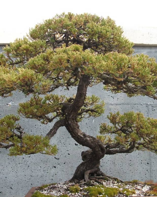 essential-tools-to-create-beautiful-bonsai