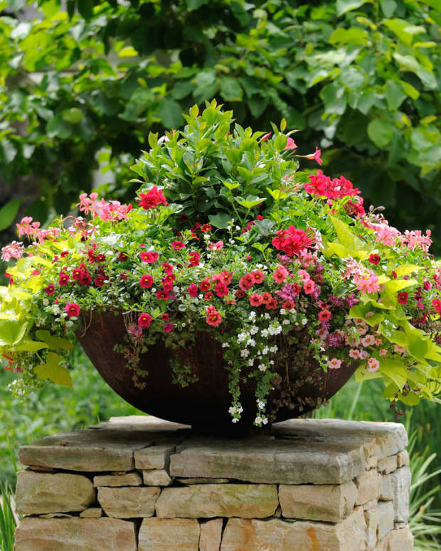the-advantages-of-container-gardening