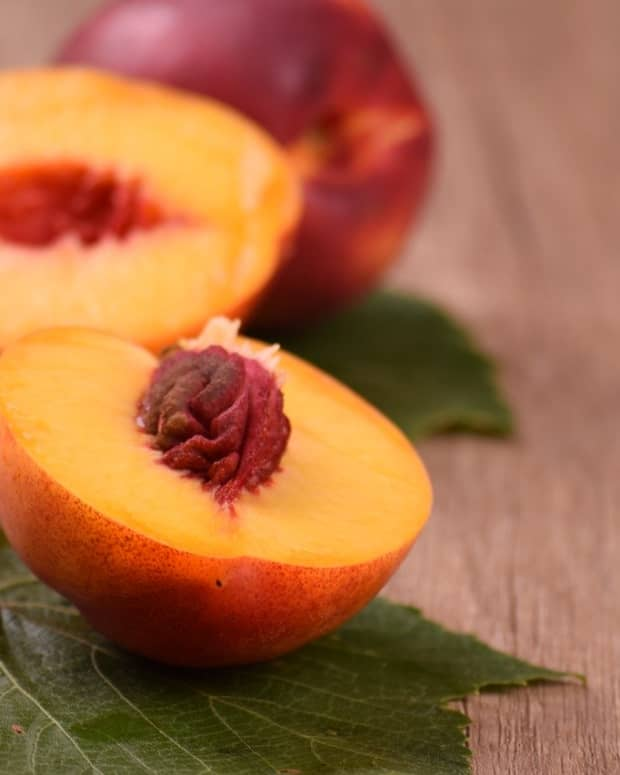 why-you-should-plant-a-nectarine-tree-today