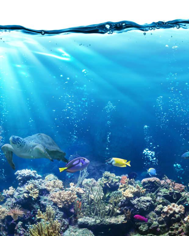 choosing-the-best-fish-for-aquaponics
