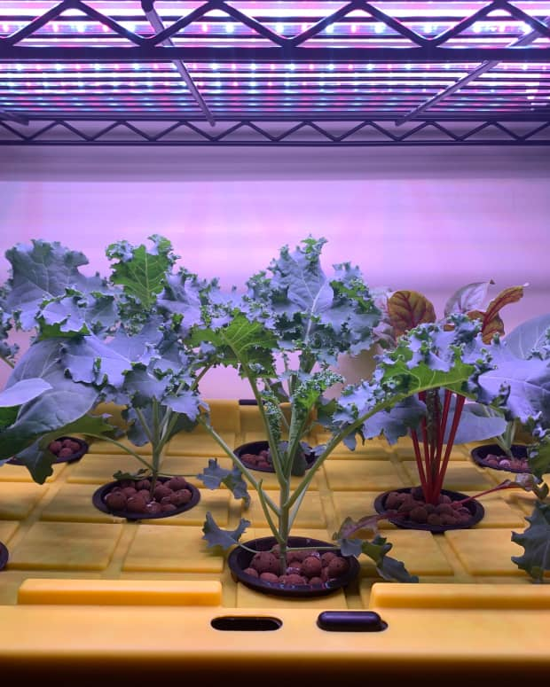 build-your-own-hydroponic-system-a-step-by-step-guide