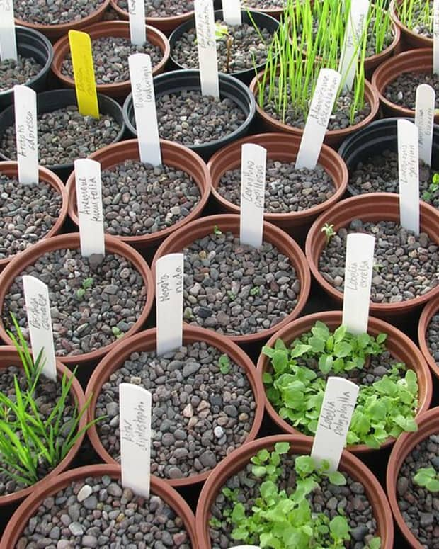 how-to-prevent-damping-off-disease-when-starting-seeds-indoors