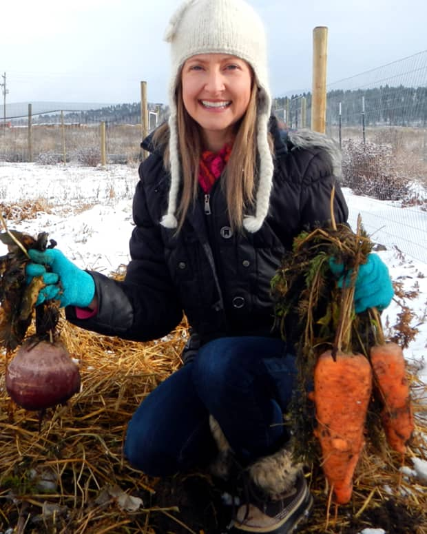 how-to-overwinter-your-garden-carrots-without-refrigeration-or-sand-buckets
