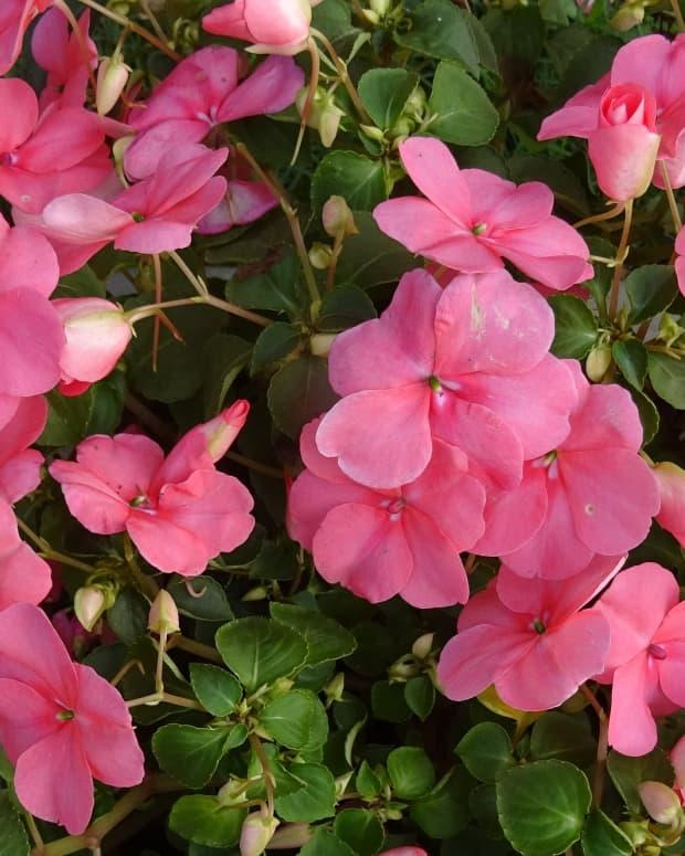 best-flowering-container-plants-for-full-sun