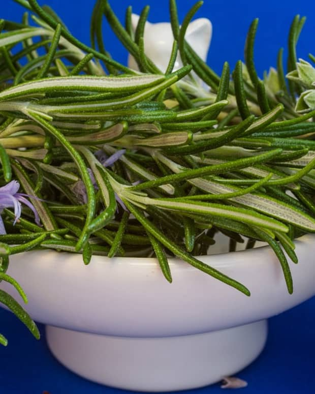 how-to-grow-rosemary-like-an-expert
