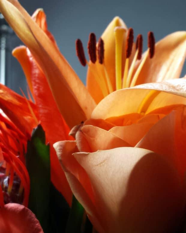 increadible-edible-list-of-flowers
