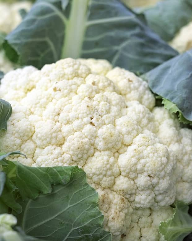 a-guide-to-growing-cauliflower