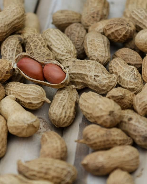 a-guide-to-growing-peanuts