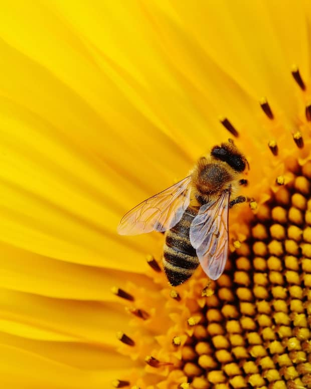 how-to-encourage-pollinating-bees-in-your-garden