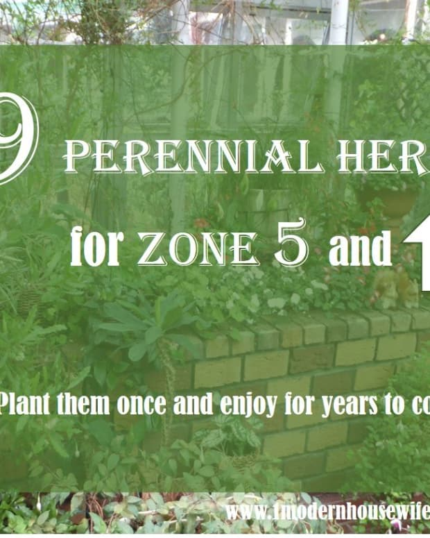 10-perennial-herbs-for-the-frugal-gardener