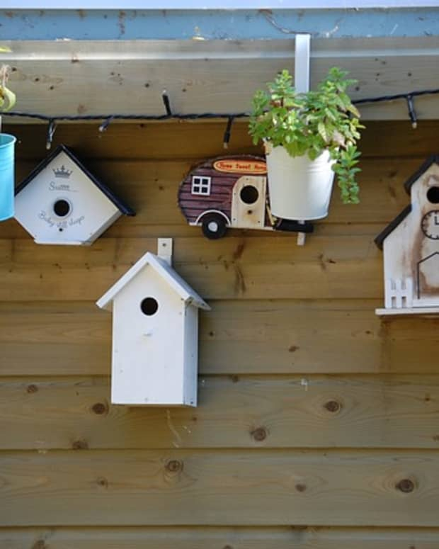 build-birdhouse-for-security-cameras
