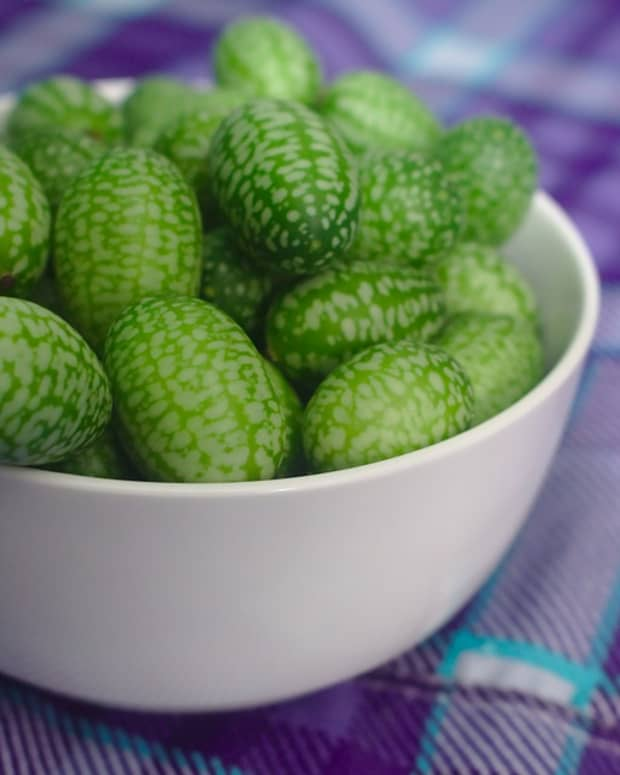 how-to-grow-cucamelons-mouse-melons