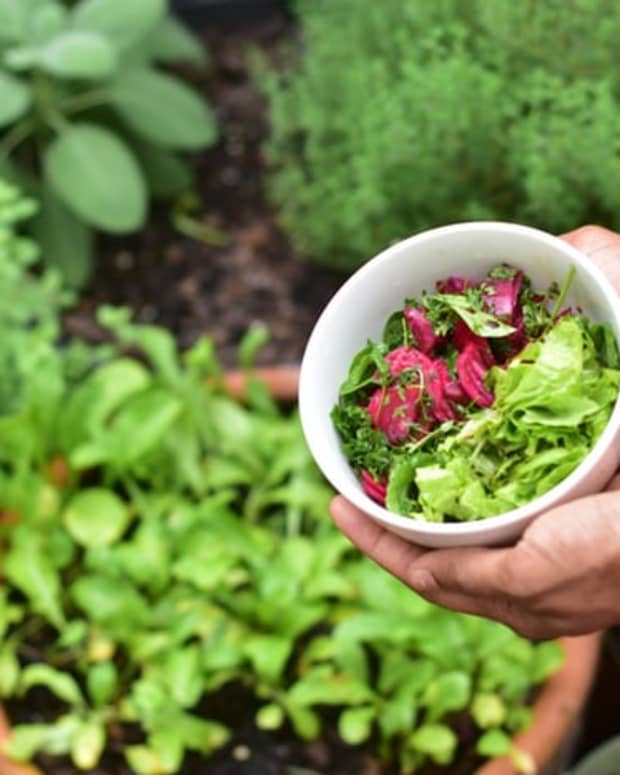 how-to-maintain-a-healthy-garden
