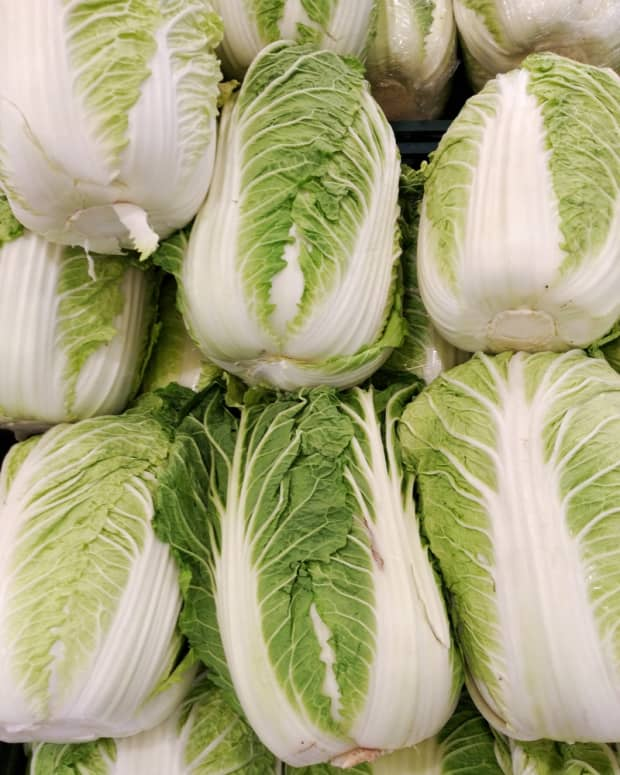 how-to-grow-napa-cabbage-chinese-cabbages
