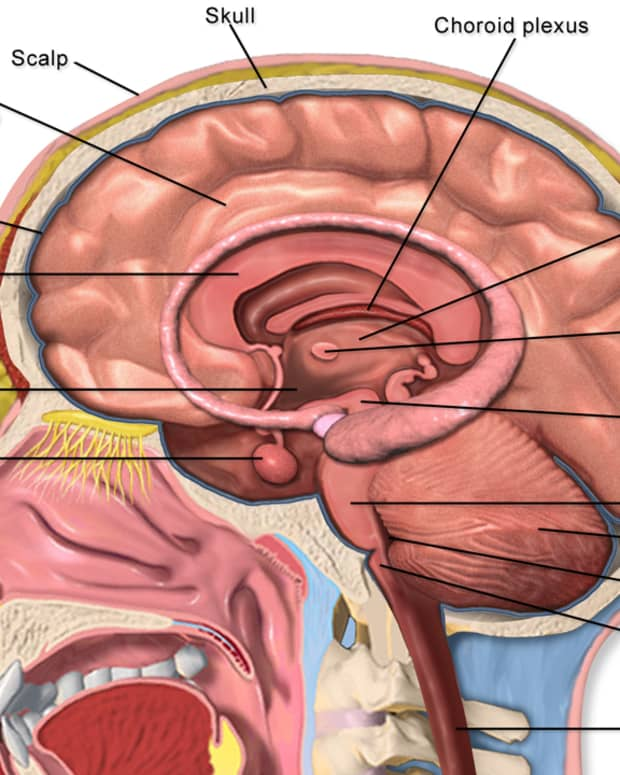 a-ketogenic-diet-for-uncontrolled-epilepsy-facts-and-research