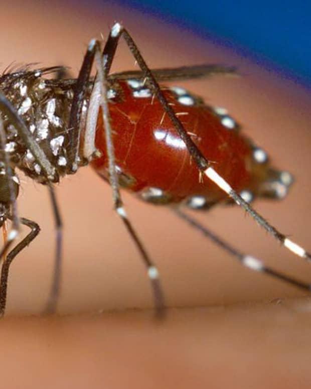 three-mosquito-borne-diseases-threatening-the-southern-us-zika-dengue-and-chikungunya
