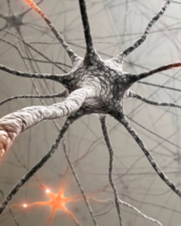 effects-of-stress-on-memory-cognition