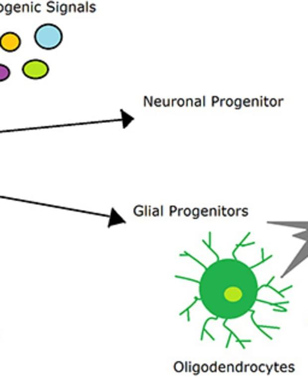 adult-neurogenesis-combatting-depression