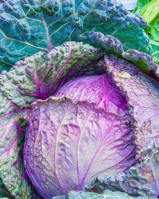 cruciferous-vegetables-indole-3-carbinol-and-colon-cancer-risk