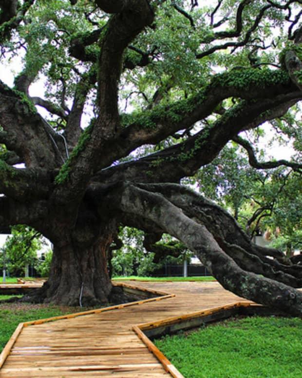 jacksonvilles-treaty-oak