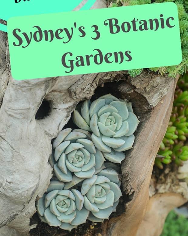 sydney-attractions-the-3-botanic-gardens-of-sydney