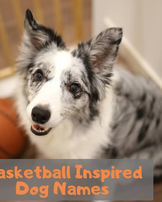 sporty-dog-names-basketball-inspired-names-for-dogs