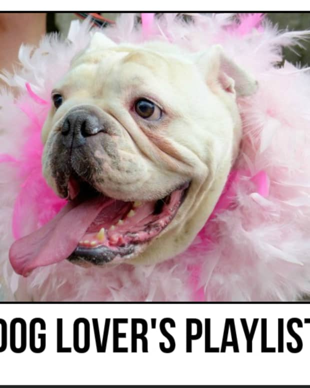 dog-lovers-playlist-25-songs-for-people-who-love-dogs