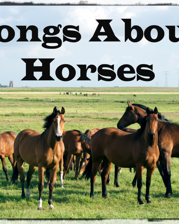 pop-rock-and-country-songs-about-horses