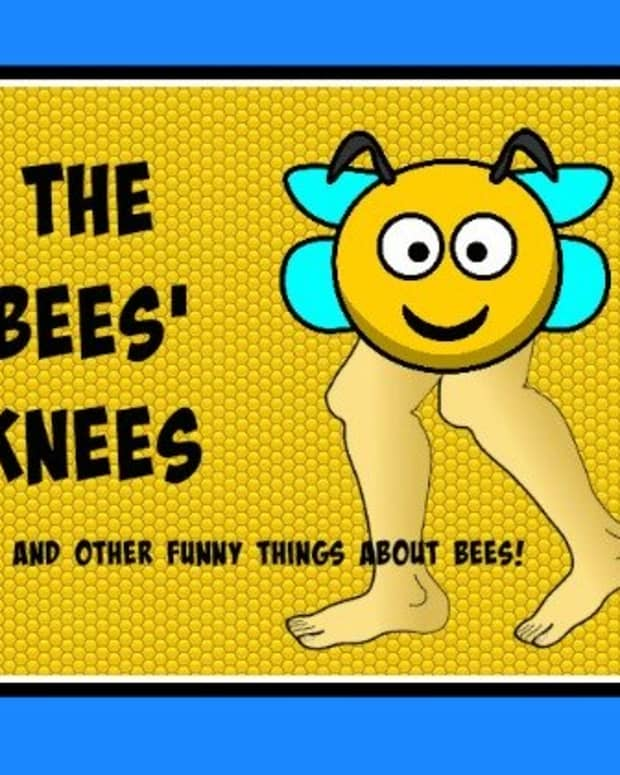 the-bees-knees-and-other-funny-things-about-bees-101-jokes