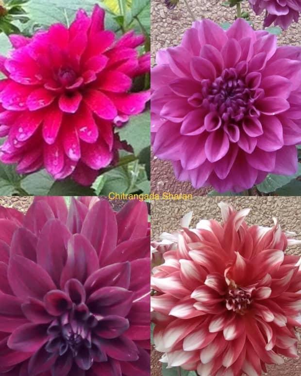 fabulous-fragrant-flowers-of-february