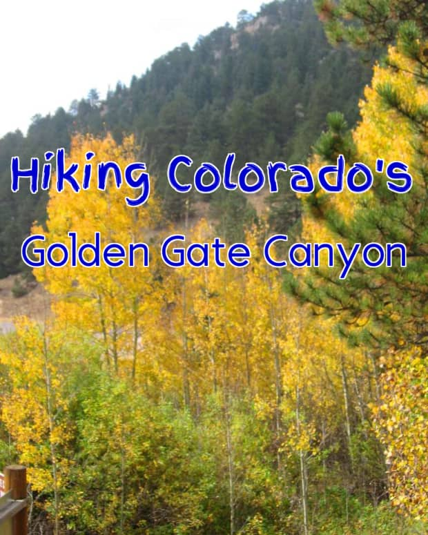 fall-colors-at-golden-gate-canyon-state-park-a-hike-up-beaver-trail-in-colorados-rocky-mountains-to-see-aspen-gold