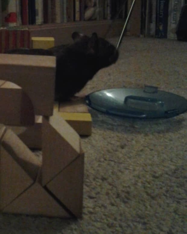 further-adventures-of-a-pampered-hamster
