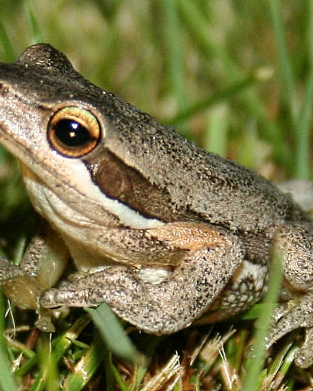 ode-to-frog-spotting
