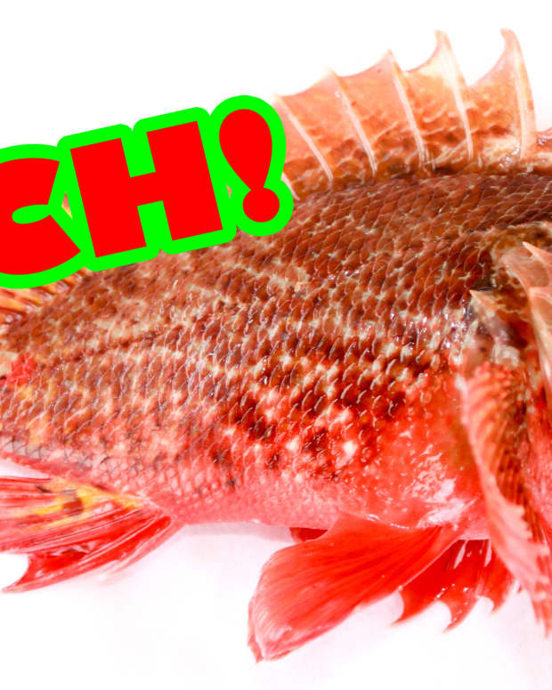 stung-by-a-scorpionfish-or-lionfish-heres-what-to-expect