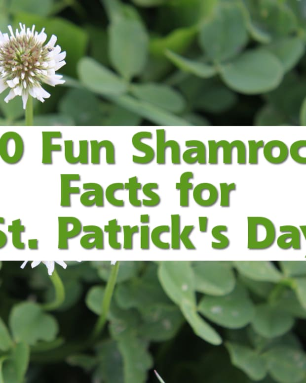 shamrock-facts