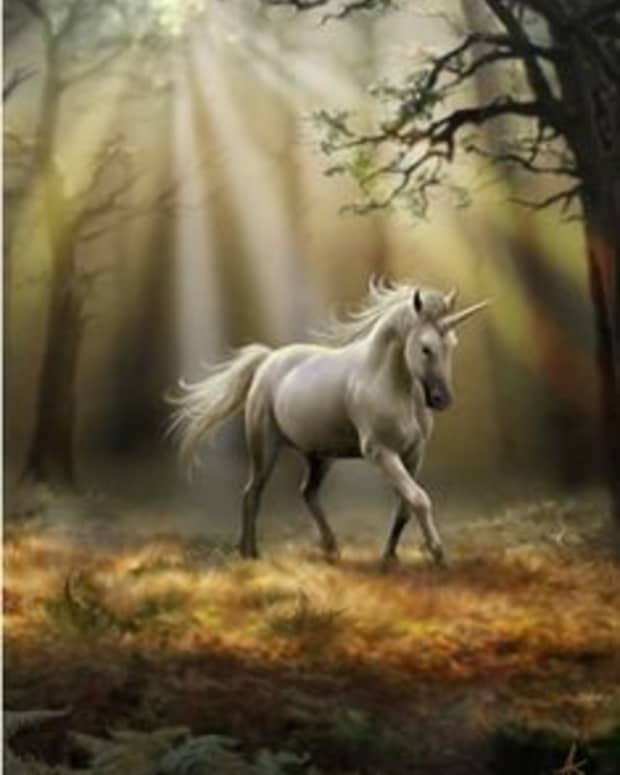 no-more-unicorns-a-poem-about-growing-up