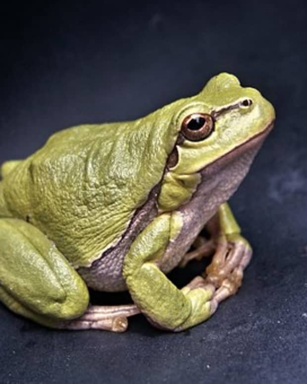 secret-revealed-what-frogs-talk-about-when-we-arent-looking