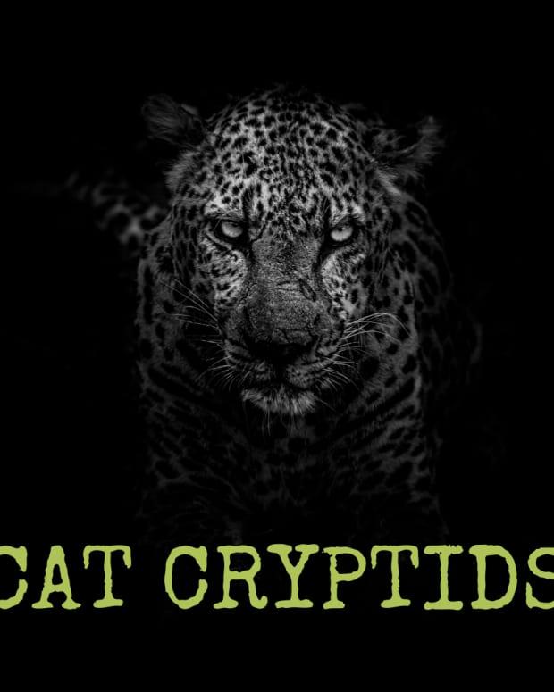 three-cat-cryptids-white-death-wampus-beast-and-cactus-cat