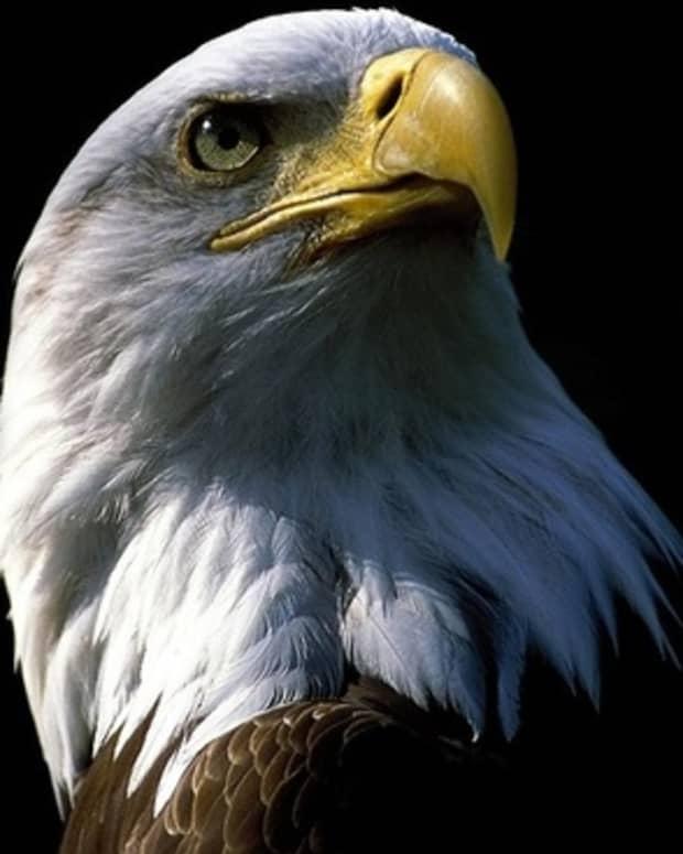 patriotic-salute
