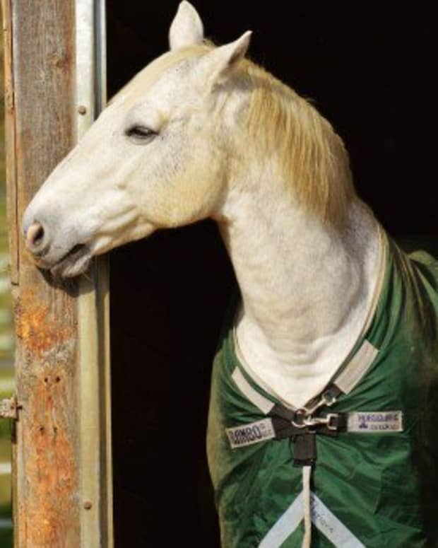 everything-to-know-about-horseback-riding